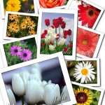 Flower Note Cards personalized