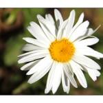 Flower set 1 Scott Hancock Photography Pleasant Grove Utah 003