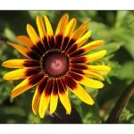Flower set 1 Scott Hancock Photography Pleasant Grove Utah 004