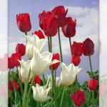 Flower set 2 Scott Hancock Photography Pleasant Grove Utah 001