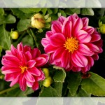 Flower set 2 Scott Hancock Photography Pleasant Grove Utah 007