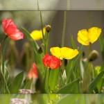 Flower set 2 Scott Hancock Photography Pleasant Grove Utah 010