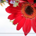 Flower set 3 Scott Hancock Photography Pleasant Grove Utah 003