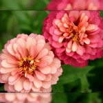 Flower set 3 Scott Hancock Photography Pleasant Grove Utah 005