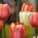 Flower set 3 Scott Hancock Photography Pleasant Grove Utah 010